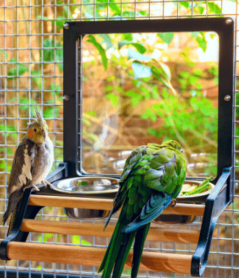 Aviary Access Feeder